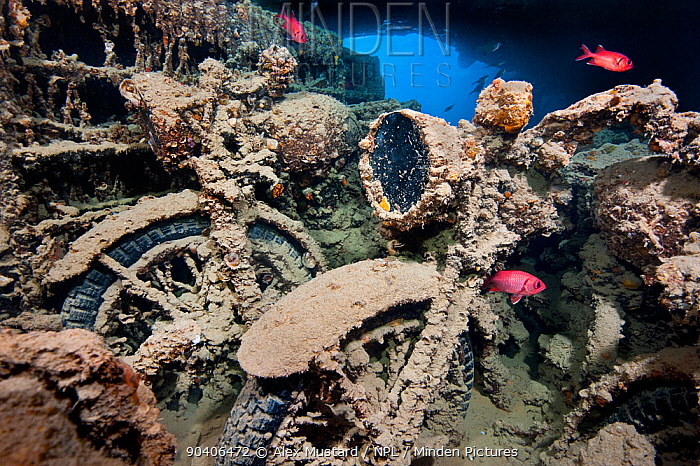 Pair of World War II motorbikes (BSA M20) inside Hold 2 of wreck of HMS Thistlegorm, with Red Sea soldierfish (Myripristis murdjan) Shaab Ali, Red Sea Sinai, Egypt  -  npl/ npl