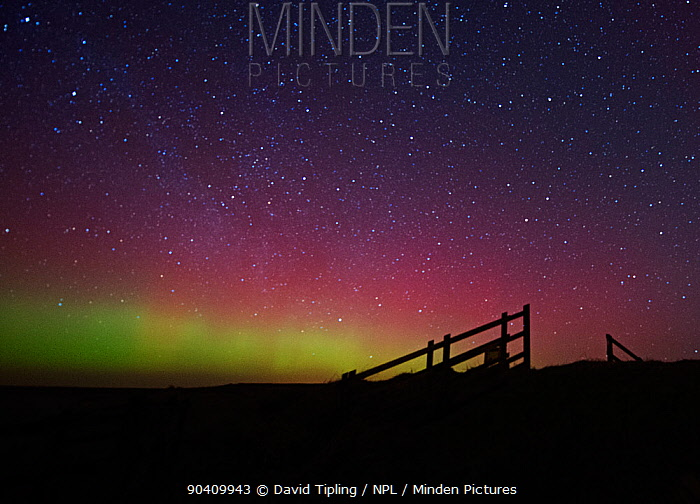 Northern Lights viewed from Cley Marshes Reserve, North Norfolk, England, UK 27th February 2014  -  David Tipling/ npl