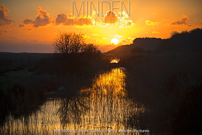 Dawn at Cley Marshes, North Norfolk, England, UK March 2013  -  David Tipling/ npl