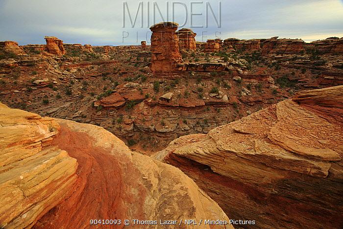 Sandstone rock formations, Big Spring Canyon, Canyonlands National Park, Utah, Colorado Plateau, April 2010  -  Thomas Lazar/ npl