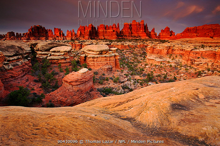 Dawn at Elephant Canyon, Needles Section, Canyonlands National Park, Utah, Colorado Plateau, April 2010  -  Thomas Lazar/ npl