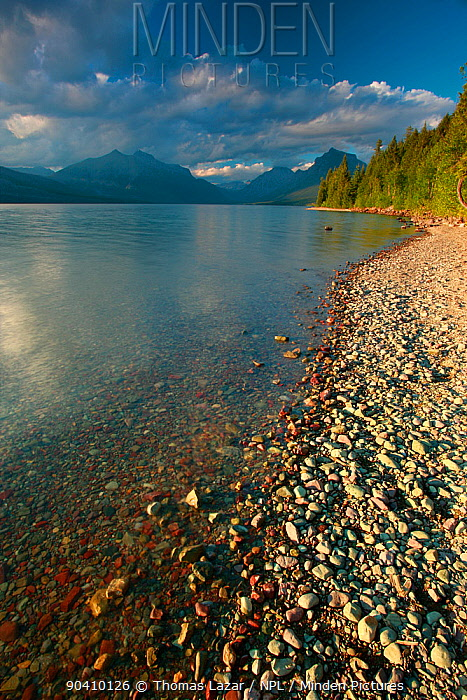 Lake McDonald shoreline, Glacier National Park, Rocky Mountains, Montana, July 2010  -  Thomas Lazar/ npl