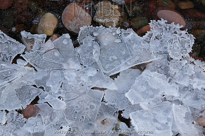 Ice crystals on shoreline, Lake McDonald, Glacier National Park, Rocky Mountains, Montana, February 2008  -  Thomas Lazar/ npl