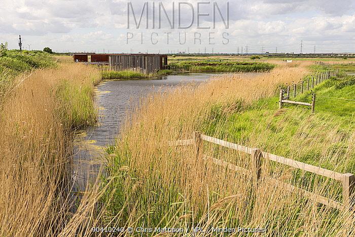 Viewing hide next to pond in Rainham Marshes, RSPB Reserve, London, UK May 2014  -  Chris Mattison/ npl