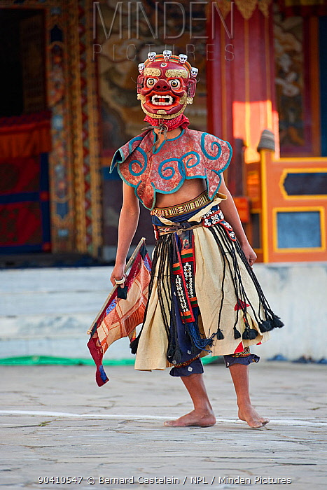 Zamcham (monastic dance) The performers in this dance wear wrathful masks and the dance is performed to safeguard the venue, which has been neutralized by the preceding Phagcham (pig dance) Torgya festival Galdan Namge Lhatse Monastery, Tawang, Arunachal Pradesh, India January 2014  -  Bernard Castelein/ npl