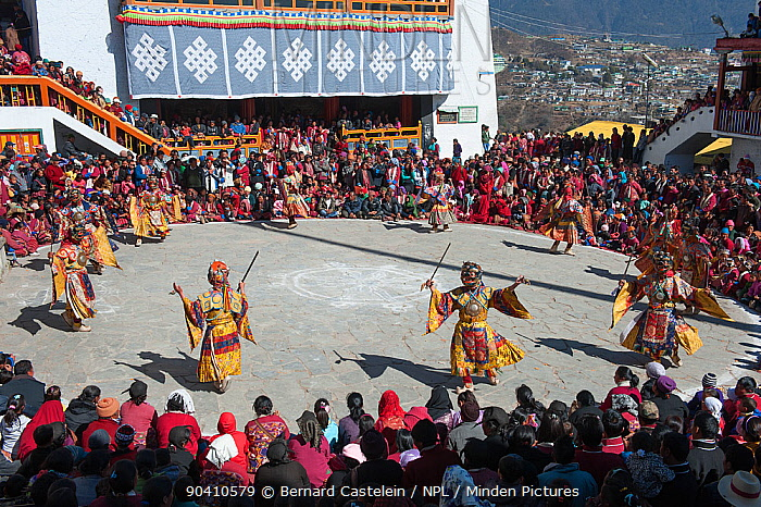 Monastic dance during Torgya festival Galdan Namge Lhatse Monastery, Tawang, Arunachal Pradesh, India January 2014  -  Bernard Castelein/ npl