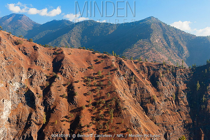 Landscape between Rupa-Shergaon-Morsing- Mandala-Dirang, Arunachal Pradesh, India, January 2014  -  Bernard Castelein/ npl