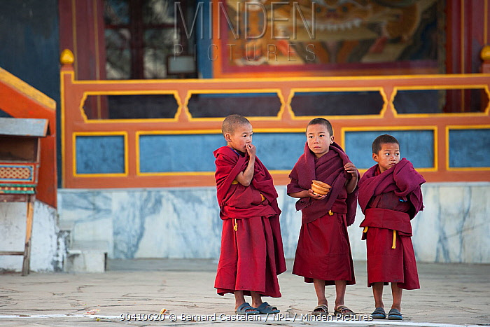 Young monks watching monastic dance during Torgya festival Galdan Namge Lhatse Monastery, Tawang, Arunachal Pradesh, India January 2014  -  Bernard Castelein/ npl