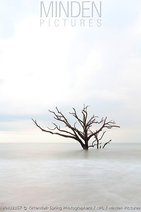 Dead tree in the sea, Boneyard Beach, Botany Bay Plantation Wildlife Management Area on Edisto Island, South Carolina, USA Changing tides have transformed what was once forest into a beach  -  Kirkendall-spring/ npl