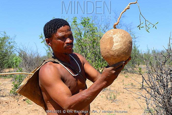 Naro San Bushman holding a milkplant root (Raphionacme sp) which has fibers containing a juice which can be drunk Kalahari, Ghanzi region, Botswana, Africa Dry season, October 2014  -  Eric Baccega/ npl