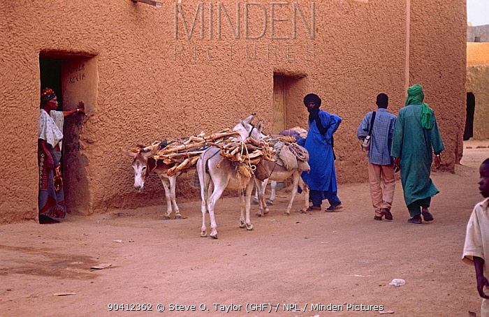 Local people and donkeys on street, Agadez, Niger, 2004  -  Steve O. Taylor/ npl