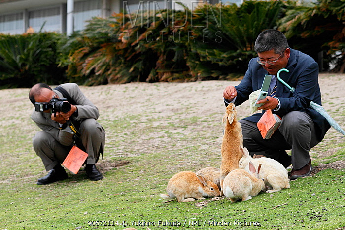 Visitors feeding rabbits at Okunoshima Rabbit Island, Takehara, Hiroshima, Japan, May 2010  -  Yukihiro Fukuda/ npl