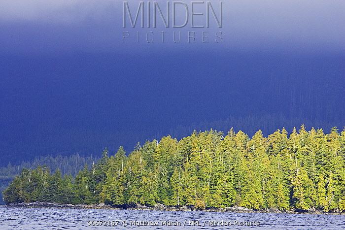 Mixture of Shore Pine (Pinus contorta) Western redcedar (Thuja plicata) Western Hemlock (Tsuga heterophylla) on the coast of the Barkley Sound, Vancouver Island, Canada  -  Matthew Maran/ npl