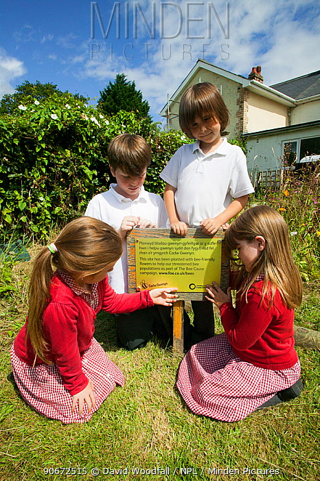 Primary school children in school garden looking at plaque from the Friends of the Earth national Bee Friendly campaign, South Wales, UK, July 2014 Model released  -  David Woodfall/ npl