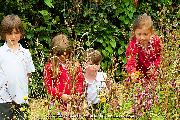 Group of Primary school children looking at native wild flowers including Red Campion (Silene dioica) planted in school garden to attract bees Part of the Friends of the Earth national Bee Friendly campaign, South Wales, UK, July 2014 Model released  -  David Woodfall/ npl