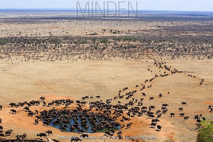 African buffalo (Syncerus caffer) herd at watering hole in dry season, Tsavo East National Park, Kenya, October  -  Denis Huot/ npl