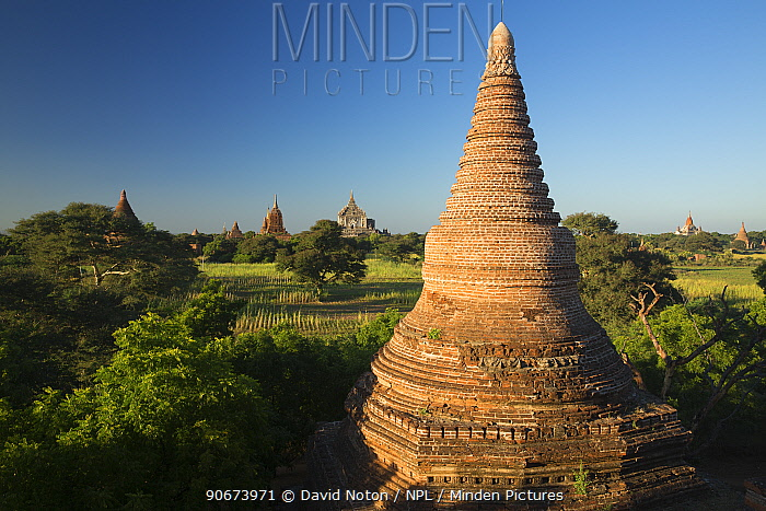 Spire of one of the Temples of Bagan, Myanmar, November 2012  -  David Noton/ npl
