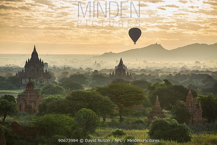 Hot air balloon over the Temples of Bagan at dawn, Myanmar, November 2012  -  David Noton/ npl