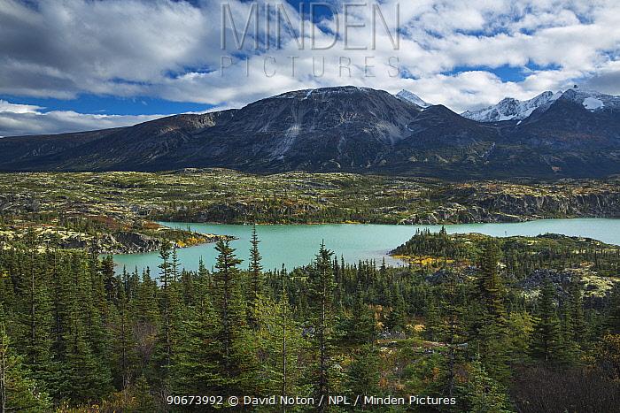 Alpine meadows with Black spurce trees (Picea mariana) near Fraser, South Klondike Highway, British Coloumbia, Canada, September 2013  -  David Noton/ npl
