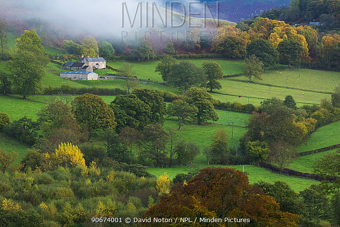 Autumn mist in Dee Valley (Dyffryn Dyfrdwy) near Llangollen, Denbighshire, Wales, UK, November 2013  -  David Noton/ npl