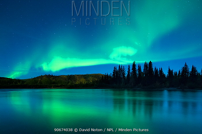 Aurora Borealis (Northern Lights) over the Klondike River, Yukon Territories, Canada, September 2013  -  David Noton/ npl