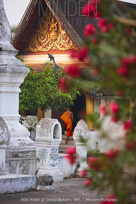 Wat Khili temple, with Buddhist monk in the entrance, Luang Prabang, Laos, March 2009  -  David Noton/ npl