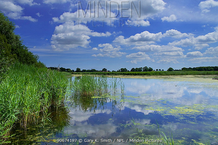 View of Reedham water, How hill, Norfolk Broads National Park, England, July 2014  -  Gary K. Smith/ npl