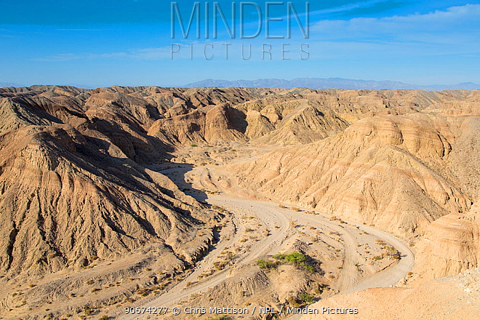 Eroded and dry river bed in desert, Anza-Borrego national park, California, USA, May  -  Chris Mattison/ npl