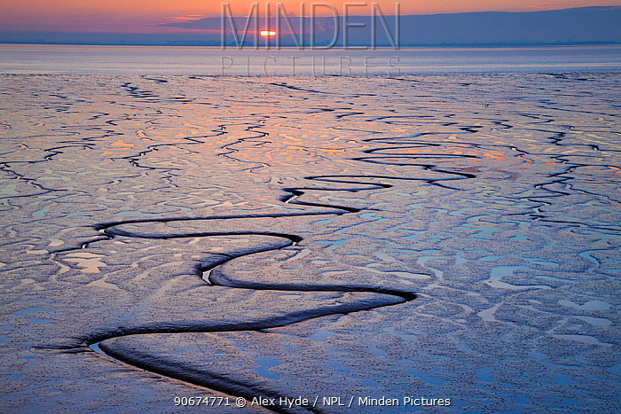 Tidal mudflats in the Humber estuary reflecting the setting sun East Yorkshire, England, UK, January 2014  -  Alex Hyde/ npl