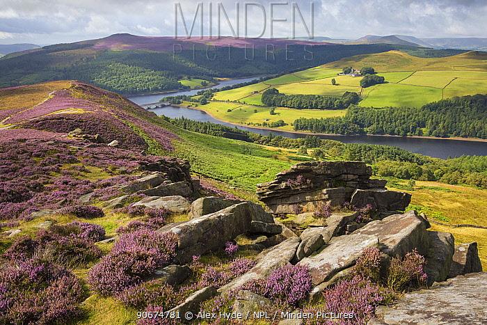 Derwent Edge, looking towards Ladybower Reservoir Peak District National Park, Derbyshire, UK August  -  Alex Hyde/ npl
