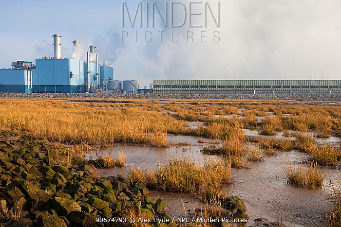 Coal-fired power station next to the Humber Estuary, Kingston upon Hull, East Yorkshire, England, UK, January  -  Alex Hyde/ npl