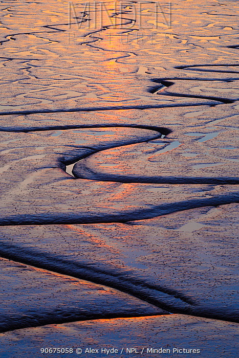 Tidal mudflats in the Humber estuary reflecting the setting sun East Yorkshire, England, UK, January  -  Alex Hyde/ npl