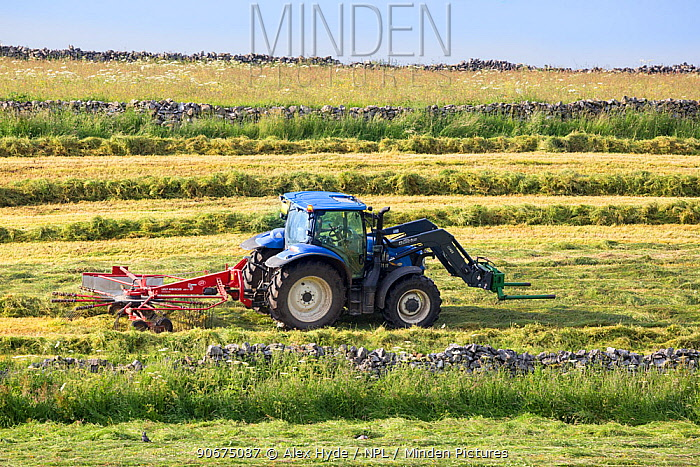 Rotary hay rake pulled by tractor, Peak District National Park, Derbyshire, UK June 2014  -  Alex Hyde/ npl