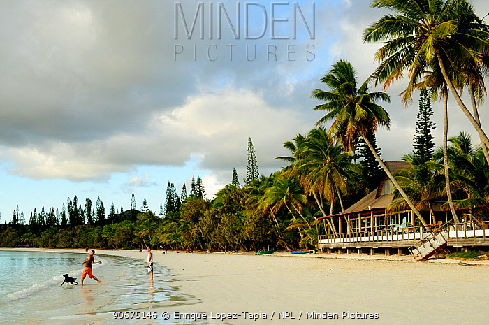Man playing with dog on tropical beach with Coconut trees (Cocos nucifera) Ile des Pins, Isle of Pines, New Caledonia, September 2008  -  Enrique Lopez Tapia/ npl