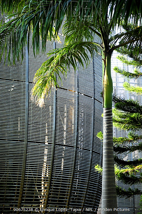 Tjibaou Cultural Center designed by Renzo Piano The building is designed to be integrated with the surrounding forest Noumea, New Caledonia, September 2008  -  Enrique Lopez Tapia/ npl
