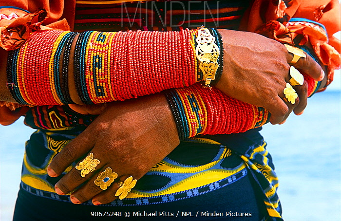 Close up of a Guna, Kuna Indian womans traditional arm decorations and gold rings, San Blas Islands, Panama  -  Michael Pitts/ npl