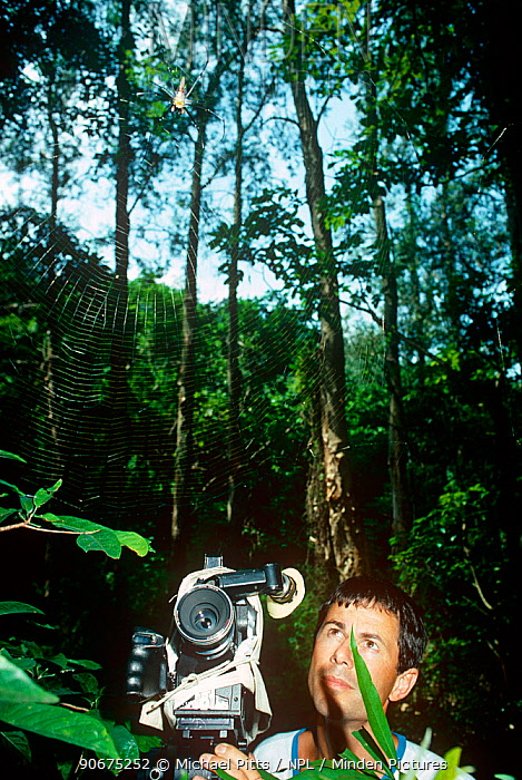 Cameraman Michael Pitts filming a Wood Spider (Nephila sp) and web at Tai Po Kau Nature Reserve, New Territories, Hong Kong Summer 1988  -  Michael Pitts/ npl