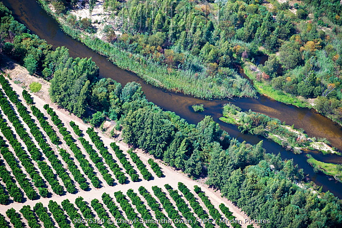 Aerial photograph of the Olifants River showing the intensive agriculture along its course, a threat to the endemic fish species found here Citrusdal and Clanwilliam area, Western Cape, South Africa December 2013  -  Cheryl-Samantha Owen/ npl