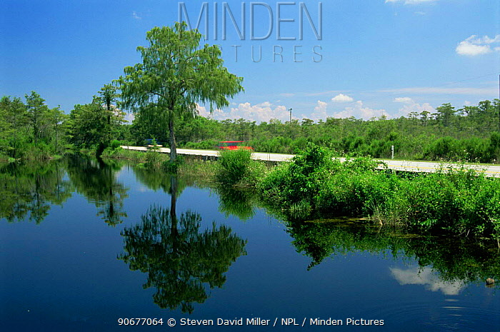 Canal alongside Taimiami Trial Scenic Highway, Florida, USA  -  Steven David Miller/ npl