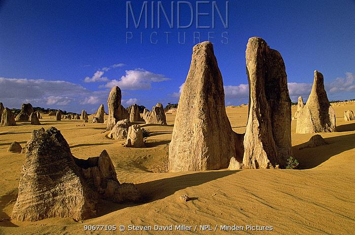The Pinnacles, limestone pillars (caused by erosion) Namburg NP, Western Australia  -  Steven David Miller/ npl