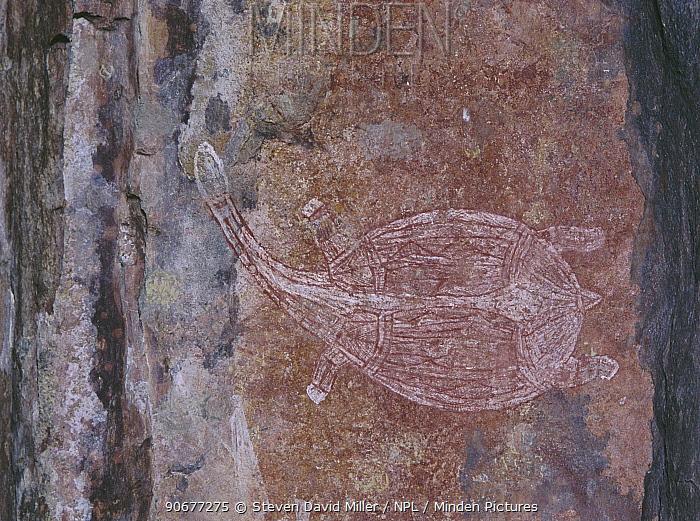 Turtle, Aborigine rock art, Ubirr Art site, Kakadu NP, Northern Territory, Australia  -  Steven David Miller/ npl