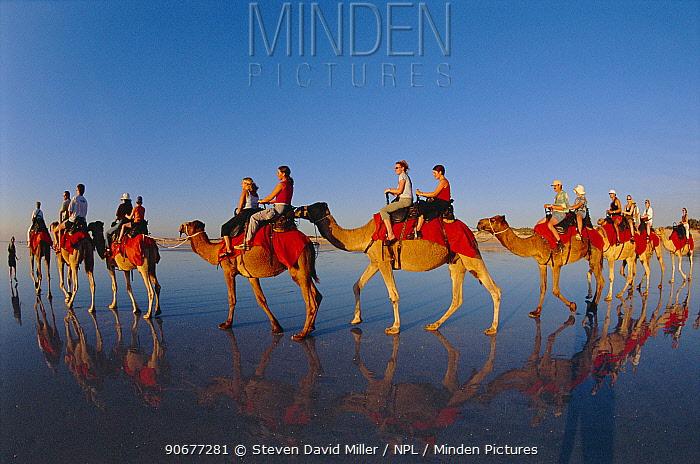 Tourists on camel ride Cable beach, Broome, Western Australia  -  Steven David Miller/ npl