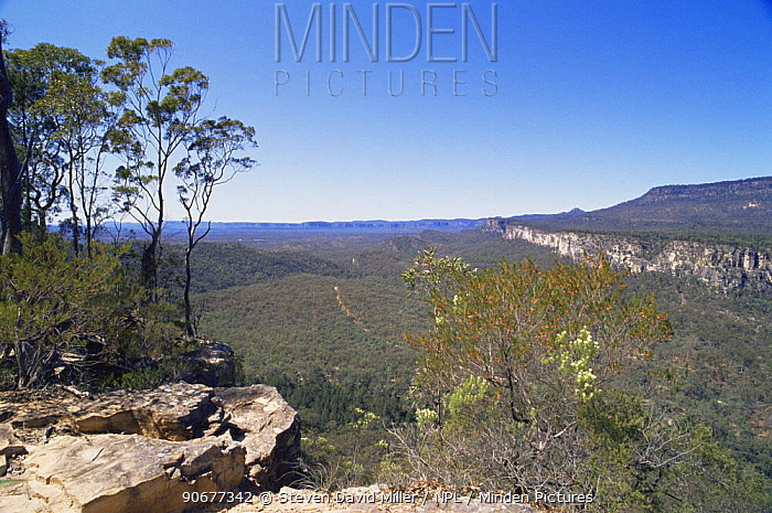 View from Bulimba Bluff across Consuelo Tableland, Carnarvon Gorge NP, Queensland, Australia  -  Steven David Miller/ npl