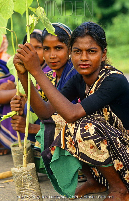 Women in the afforestation project with rubber saplings, Madhupur district, Bangladesh  -  Ian Lockwood/ npl