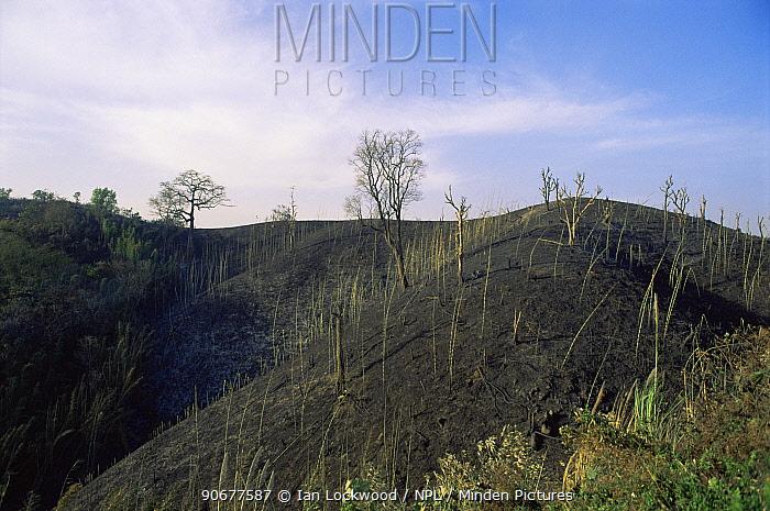 Jhuum, slash and burn cultivation of land for crop planting or cattle grazing, Garo Hills near Williamnagar, Meghalya, India  -  Ian Lockwood/ npl