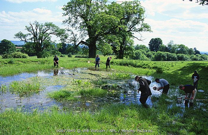 People sampling pond life on Amphibian training day at Croft Castle, Herefordshire, UK  -  Will Watson/ npl