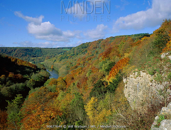 Wooded gorge of River Wye valley, Gloucestershire, UK Upper Wye Gorge SSSI  -  Will Watson/ npl