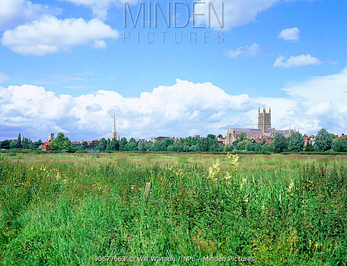 Worcester cathedral, meadow and ditch with Meadowsweet and Reed canary grass, England  -  Will Watson/ npl