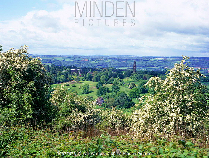 View from Abberly Hill with flowering Hawthorn in foreground, Worcestershire, UK  -  Will Watson/ npl