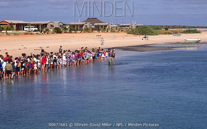 Tourists watch wild Bottlenose dolphin (Tursiops truncatus), Monkey Mia, Shark Bay, Western Australia  -  Steven David Miller/ npl